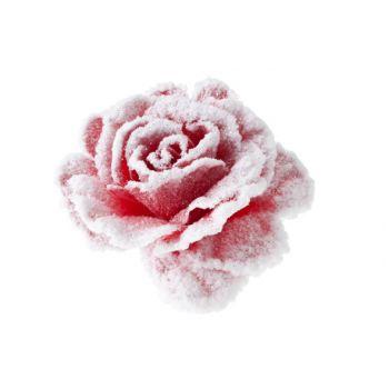 Cosy @ Home Roos Op Clip Roze Besneeuwd D10cm