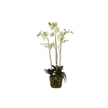 Cosy @ Home Phalaenopsis Plant With Moss Groen 105cm